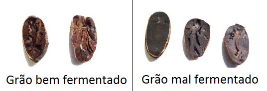 Grão de cacau fermentado à esquerda e Grão não fermentado de cacau à direita