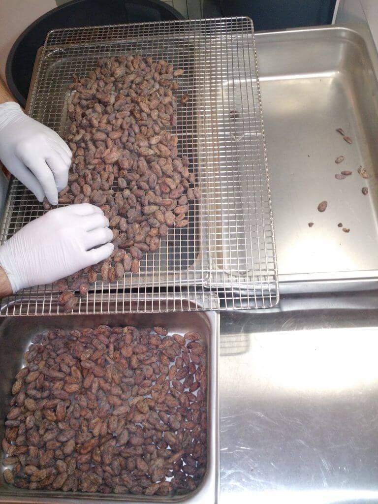 Separação manual das sementes de cacau