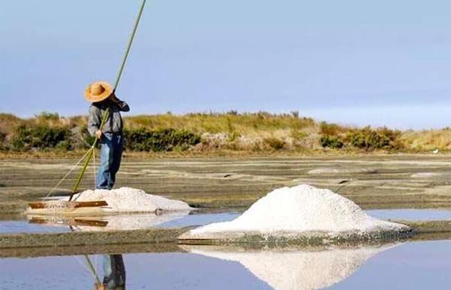 produtor de sal colhendo a flor de sal na frança